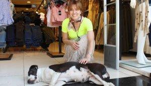 Sokak hayvanları mağazalarda serinliyor