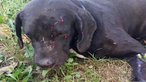 Bahçesine giren köpeği tüfekle vurdu