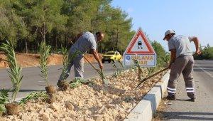 Kepez'in caddeleri çiçek açıyor