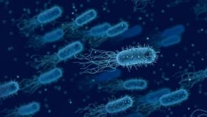 Bu bakteri kanser riskini artırıyor