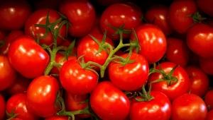 Rusya, 20 ton domatesi iade etti!