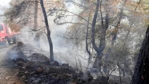 Tarla temizlenirken orman yandı