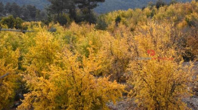 Toroslarda sonbahar güzelliği