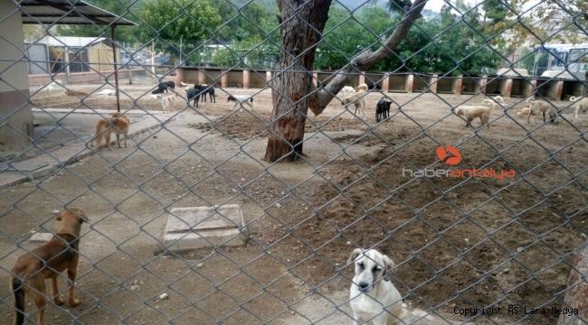 Kemer Belediyesi'nden başıboş köpeklerle ilgili açıklama