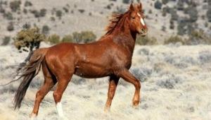 Silahla vurulan yılkı atı tedaviye alındı