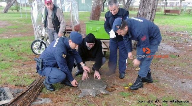 Kıyıya sürüklenen Nil kaplumbağası tedavi altına alındı