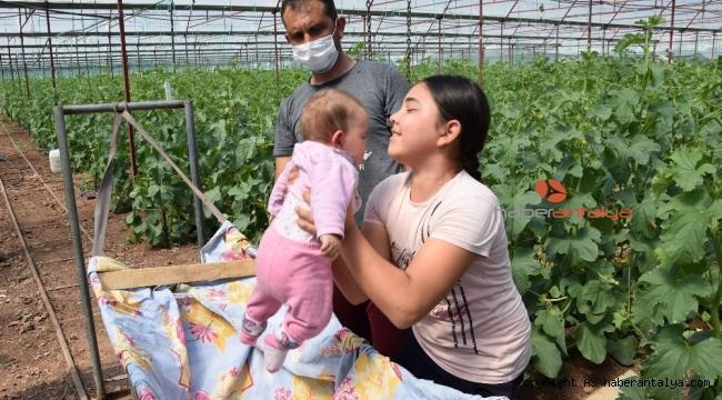 Bebekleriyle seralara taşındılar !