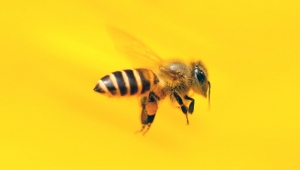 Antalya'da arı alarmı