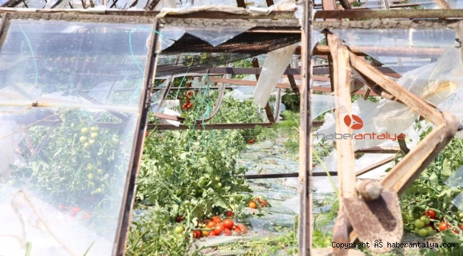 Antalya'da seralardaki hasar günün ağarması ile ortaya çıktı