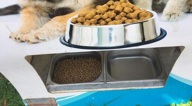 Sokak hayvanlarına 80 yeni beslenme ünitesi