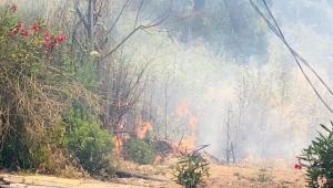 Alanya'da çalılık yangını