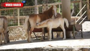 Antalya Hayvanat Bahçesi'nde 100 yeni yavru