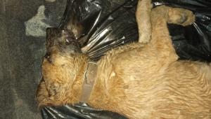 Canilerden köpek katliamı !