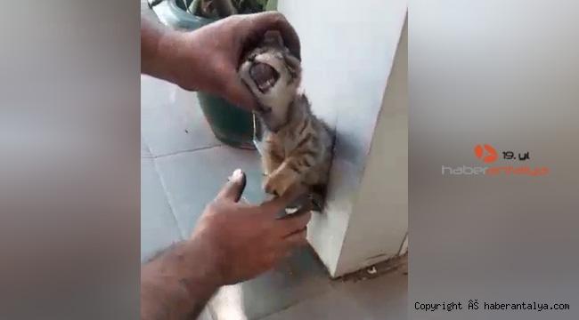 Kediyi spiral ile kurtardılar