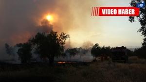 Zeytinpark'ta korkutan yangın
