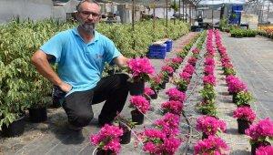 5 yıldır süs bitkisi üretiyor. Bakın ne kadara satıyor ?