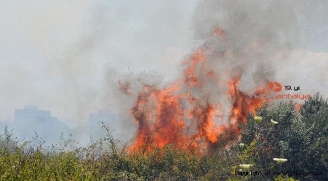 Antalya'da korkutan yangın ! 10 dönüm alan kül oldu