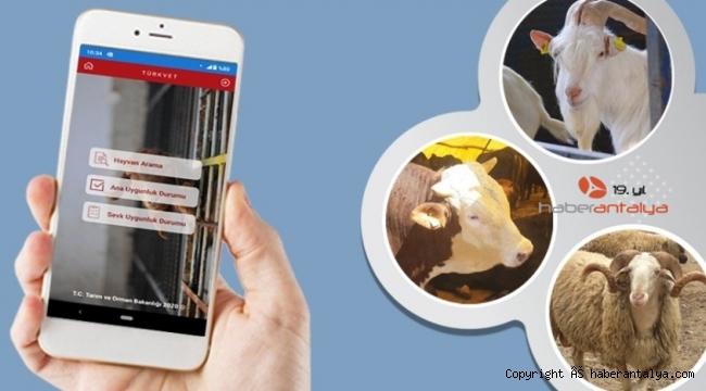 Hayvancılık üreticilerine online uygulama