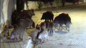İlçe merkezine'domuz timi' kurulsun çağrısı