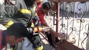 Korkuluklara sıkışan yavru köpeği itfaiye kurtardı