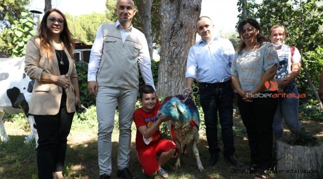 Kurban kesemeyen vatandaş CİMER'den kurbanlık talep etti, Bakan Pakdemirli gönderdi !