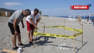 Pandemi dönemi onlara yaradı, sahiller Caretta Caretta'lara kaldı