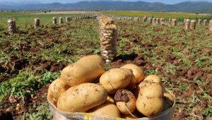 Patates üreticisi dertli !