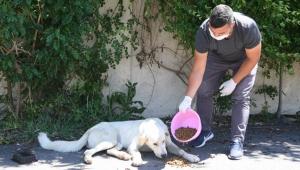 Sokak hayvanları için su ve mama çağrısı