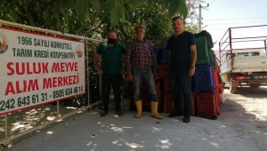 Tarım Kredi, Korkuteli'nde ilk kez vişne alımı yaptı