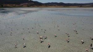Yarışlı Gölü'nde flamingoların görsel şöleni havadan görüntülendi