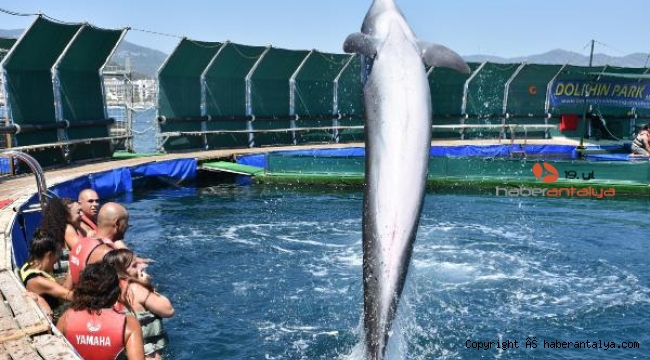 Dünyaca ünlü yunus parkı mühürlendi