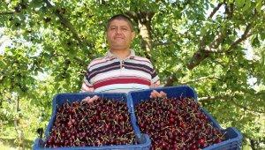 Isparta'dan 20 ülkeye kiraz ihracatı