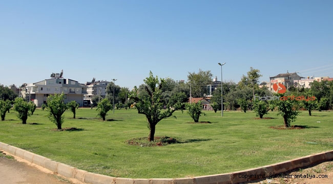 Kepez'e 30 ağaçlı portakal bahçesi kazandırıldı