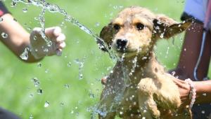 Konyaaltı Belediyesi köpekleri serinletti