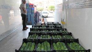 Alanya'dan Bulgaristan'a 3 ton avokado ihracatı
