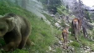 Antalya'nın doğal yaşamı görüntülendi