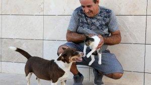 Köpek 'Max', üç yavru kediyi emziriyor