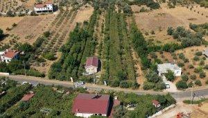 Likyalılardan kalan miras: Margaz üzümü