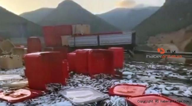 Tonlarca balık karayoluna saçıldı !