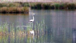 Demre'de flamingo heyecanı
