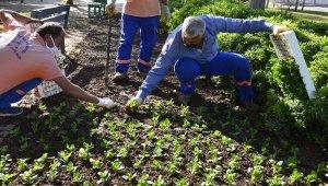 Muratpaşa'da parklar çiçek açacak