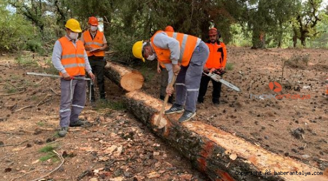 Ormanda kaliteli ve güvenli üretim eğitimi