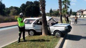 Otomobil refüjdeki palmiyeye çarptı