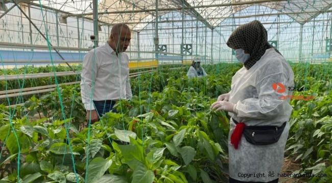 Türk mühendislerden yerli tohum hamlesi