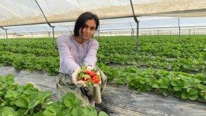 Antalya'da yılın ilk çilek hasadının heyecanı başladı