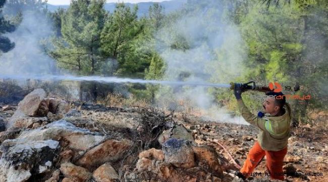 Manavgat'ta yanan orman alanında kaçak kesim