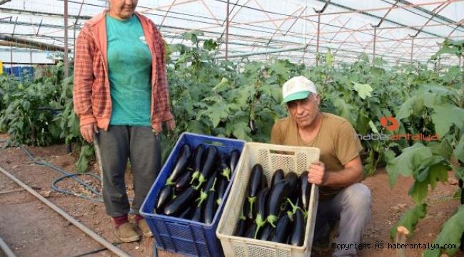 Antalya'da çiftçiler üretimi aralıksız sürdürüyor