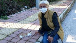 Antalya'da yavru kedinin bacakları ile kuyruğunu kesen şüpheli aranıyor