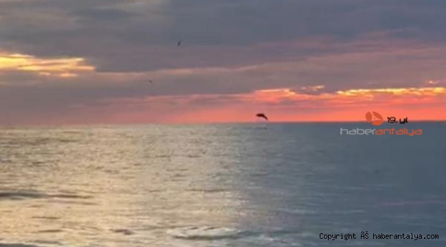 Antalya'da yunusların gün batımı eşliğinde şovu