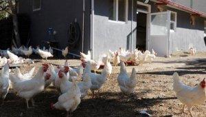 Okul bahçesindeki kümesten sağlanan yumurtalar öğrencilere burs oldu